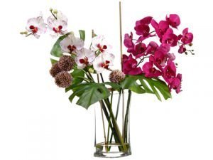 "28""H x 20""W x 26""L Allium/Phalaenopsis Orchid in Glass Vase Orchid White"