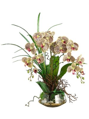 "28""H x 20""W x 19""L Phalaenopsis Orchid/Twig in Glass Vase Burgundy Green"