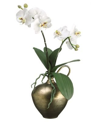 "24""H x 9""W x 12""L Phalaenopsis Orchid in Vase White"
