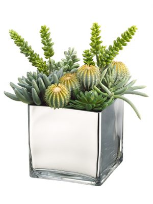 "15""H x 9""W x 9""L Barrel Cactus/Monkey Tail/Aeonium in Glass Container Green"