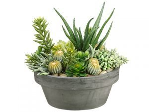 "15""H x 15""W x 15""L Succulent in Fiber Cement Pot Green"