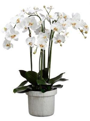 "39""H x 22""W x 24""L PhalaenopsisOrchid Plant In Terra CottaPot White"