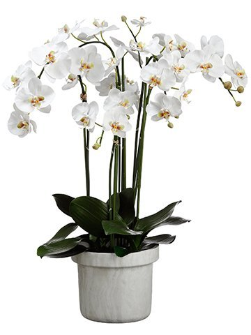 "39""H x 22""W x 24""L Phalaenopsis Orchid Plant In Terra Cotta Pot White"