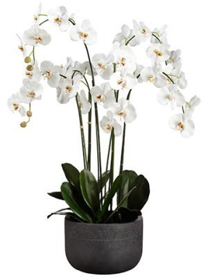 "52""H x 27""W x 32.5""L Phalaenopsis Orchid Plant In Fiber Clay Planter White"