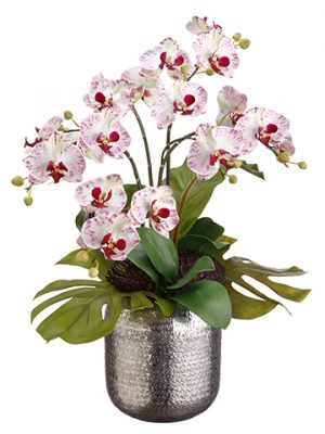 "25""H x 18""W x 23""L Bird's Nest Leaf/Phalaenopsis in Silver Ball White Orchid"