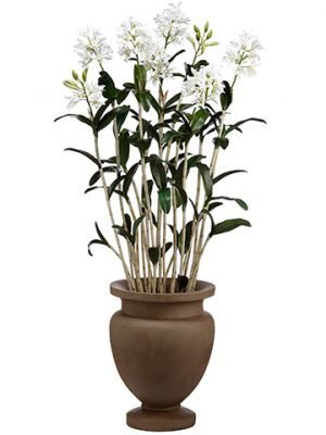 "72""H x 28""W x 28""L Cattleya Orchid Plant in Cement Planter Cream Green"