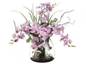 "25""H x 24""W x 24""LPhalaenopsis/Skimmia/Twig inGlass Vase Violet Two Tone"