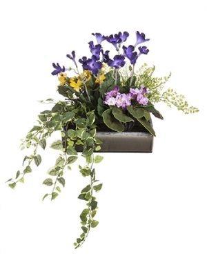 """14""""H x 20""""W x 31""""L Violet/Streptocarpus in PotGreen Lavender"""
