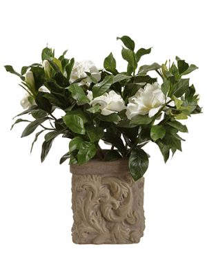 "18"" Gardenia Plant in Stone Pot Cream"