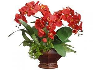 "20""H x 18""W x 18""L PhalaenopsisOrchid/Moss/Orchid Leaf inScallop Bowl Brick Green"