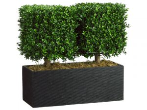 "24""H x 12""W x 26""L Boxwood Topiary in Rectangular Bamboo Container Green"