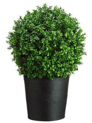 "30""H x 16""W x 16""L Boxwood Topiary in Bamboo Container Green"