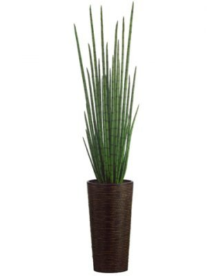 """84"""" Snake Plant inBamboo/Rope ContainerGreen"""