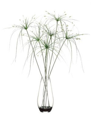 "40""H x 33""W x 33""L Papyrus Grass in Glass Container Green"