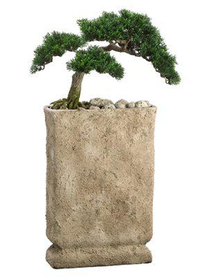 "32""H x 12""W x 17""L Cedar Bonsaiin Cement PotGreen"