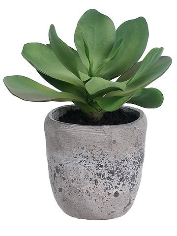 "12""H x 9""W x 9""L Kalanchoe Plant in Cement Planter Green"