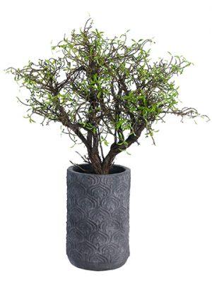 """23""""H x 13""""W x 16""""L Mini LeafSculpture Tree in Terra CottaPlanter Green"""