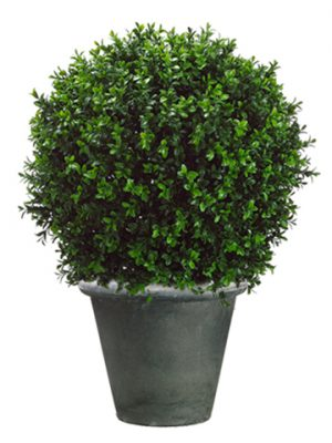 "30"" Boxwood Topiary in Fiber Cement Container Green"