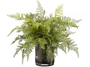 "17""H x 20""W x 20""L Lace Fern And Organic Soft Soil in Glass Vase Green"