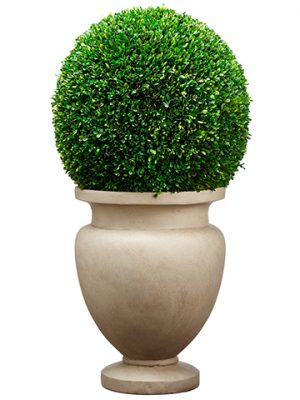 "45""H x 23""W x 23""L Large Preserved Boxwood Ball in Cement Planter Green"