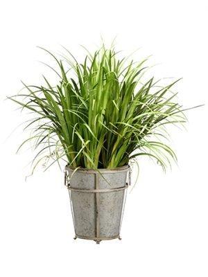 "38"" Reed Grass/CymbidiumFoliage in Tin PlanterGreen"