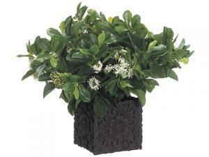 "16""H x 17""W x 20""L Privet Bloom/ Queen Annes Lace In Cement Pot Green"