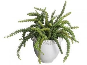 "15""H x 16""W x 15""L Succulent In Ceramic Vase Green"