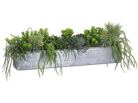"""12""""H x 33""""W x 13""""L Aeonium/CactusMix In Aluminum RectangularPlanter Green"""