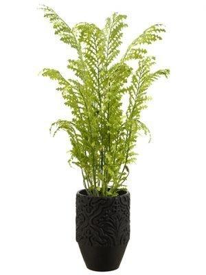 "74""H x 36""W x 40""L Fern in Planter Green"