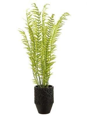 "72""H x 29""W x 30""L Fern in Planter Green"