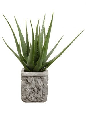 "28""H x 19""W x 24.5""L Agave Plant in Stone Pot Green"