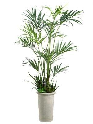 8.5' Kentia Palm withSucculent in Fiber CementPlanter Green