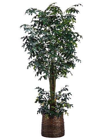 10' Fishtail Palm Tree inBasketGreen