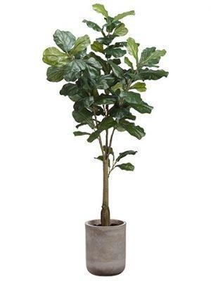 5.5' Fiddle Leaf Tree in FiberCement PlanterGreen