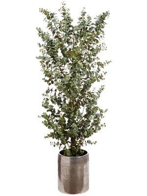 8' Eucalyptus Tree inAluminum PlanterGreen
