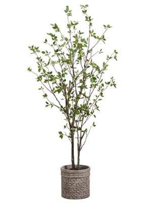 6' Cornus Tree in Terra CottaPlanterGreen