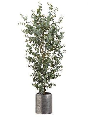 6.5' Eucalyptus Tree inAluminum PlanterGreen