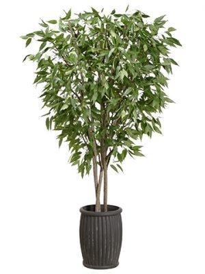 10' Eucalyptus Tree in Cement Planter Green
