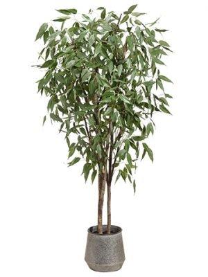 8' Eucalyptus Tree in TinPlanterGreen
