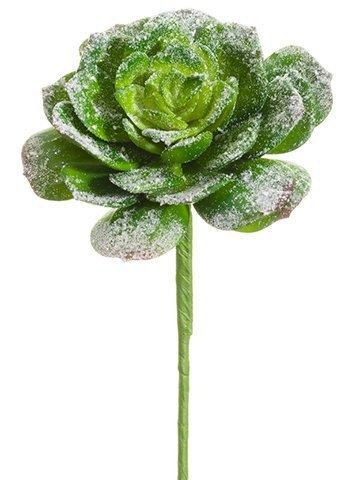 """10"""" Snowed Echeveria BouquetPickGreen Snow"""