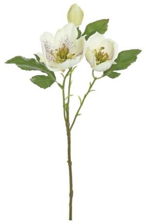 Hellebores spray, 17in, Cream