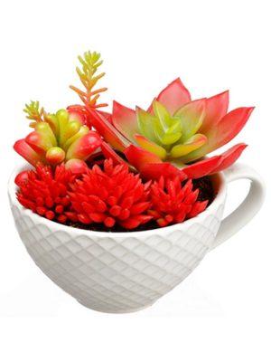 3.75in Succulent Garden in Ceramic Cup Red