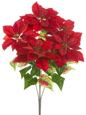 "23.5"" Glittered Velvet Poinsettia Bush x5 Red"