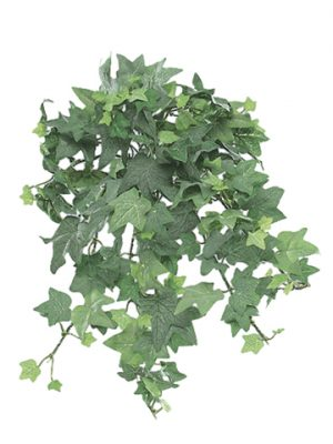 09749698 MINI ENGLISH IVY BUSH 13IN Frosted Green