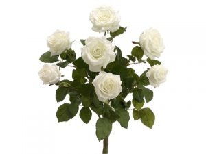 "21.5"" Mixed Rose Bush x7 w/28 Sets Lvs. Cream"