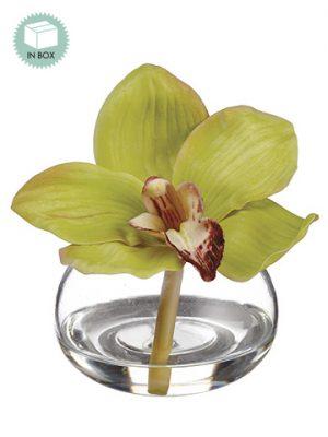 "4"" Cymbidium Orchid in GlassVase in Re-Shippable BoxGreen"