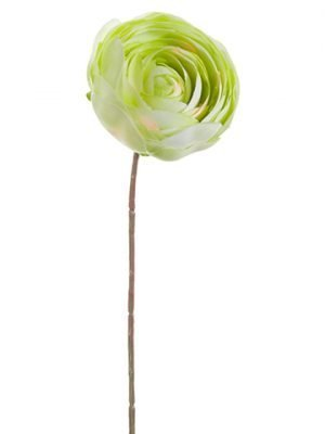 "9.5"" Ranunculus Stem Green"