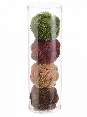 "2"" Sedum Orb (4 ea/acetate box) Mixed"