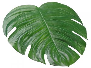 "18""W x 16.5""L Monstera Placemat Green"