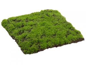 "12""W x 12""L Square Moss Sheet Green"